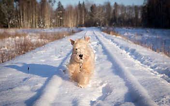 Pfotenpflege beim Hund im Winter