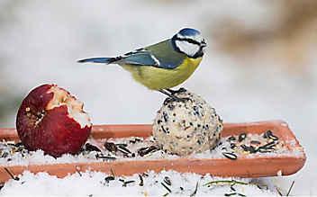 Fettfutter für Vögel herstellen
