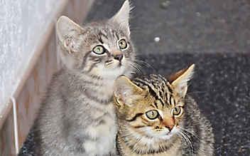 Herzlos-Rekord: Immer mehr Tiere im Sommer ausgesetzt