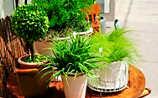 Käfers Gartentipps: Zimmerpflanzen auf Sommerfrische