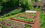 So bleibt das Gemüsebeet schädlingsfrei und gesund