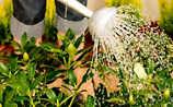 Käfers Gartentipps: So schützen Sie Ihren Garten vor der Sommerhitze