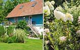 Käfers Gartentipps: 5 Spätsommerblüher