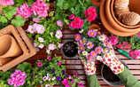 Die beste Erde für Kübelpflanzen