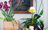 Käfers Gartentipps: Das Einmaleins der Orchideen-Pflege