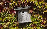 Oktober-Gartentipp Nr. 3: Nistkästchen gründlich reinigen