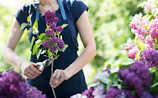 April-Gartentipp Nr. 3: Flieder richtig schneiden