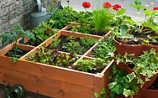 April-Gartentipp Nr. 4: Kräuter gegen Schädlinge