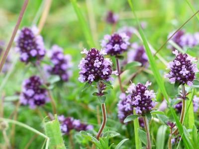 Naturapotheken-Box Pflanzen