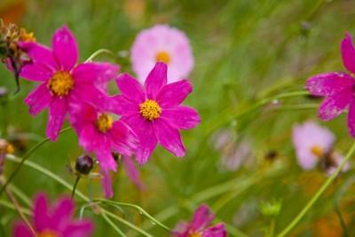 Duftkerze Blütenwiese