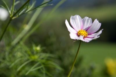 Samenkugeln Blumenwiese